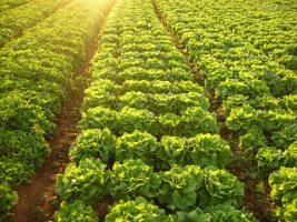 Rio Bonito inaugura Feira da Agricultura Familiar