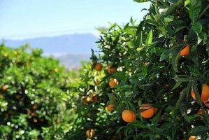 Fortalece Sociobio: amplo programa de capacitação destinado à agricultura.